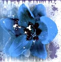 Tulip Fresco (blue) Framed Print