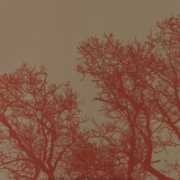 Cinnamon Tree I Fine Art Print