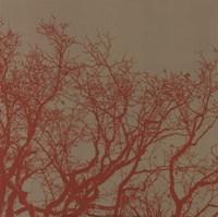 Cinnamon Tree II Framed Print