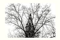 """City Hall (branches) by Erin Clark - 19"""" x 13"""""""