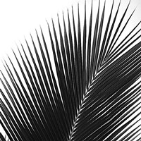 Palms 14 (detail) Fine Art Print