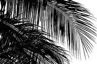 Palms 3 Fine Art Print