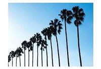 La Jolla Palms Fine Art Print