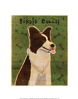 "Border Collie by John W. Golden - 11"" x 14"""