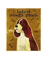 "English Springer Spaniel by John W. Golden - 11"" x 14"""