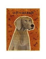 Weimaraner Fine Art Print