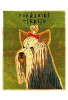 "Yorkshire Terrier by John W. Golden - 13"" x 19"""