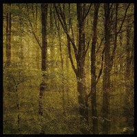 "Fog in Mountain Trees No. 2 by John W. Golden - 20"" x 20"""
