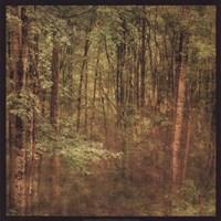 Fog in Mountain Trees Fine Art Print