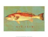 Red Drum Fine Art Print
