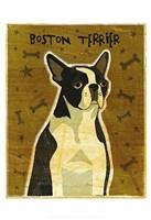 "Boston Terrier by John W. Golden - 13"" x 19"", FulcrumGallery.com brand"