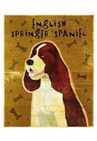 "English Springer Spaniel by John W. Golden - 13"" x 19"""