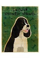 "English Springer Spaniel (black and white) by John W. Golden - 13"" x 19"""