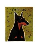 "Doberman by John W. Golden - 11"" x 14"""