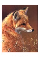 Curious- Red Fox Framed Print