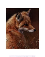 "Curious- Red Fox by Joni Johnson-Godsy - 11"" x 14"" - $10.99"