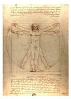 "Vitruvian Man by Leonardo Da Vinci - 26"" x 36"""