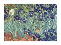 Irises in the Garden by Vincent Van Gogh - various sizes