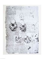 Five Views of a Fetus in the Womb by Leonardo Da Vinci - various sizes