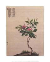 "Flowering Chinese Tree I by Linda Stubbs - 16"" x 20"""