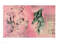 Anatomical drawing of hearts and blood vessels Framed Print