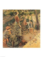 The Apple Pickers, 1886 by Camille Pissarro, 1886 - various sizes