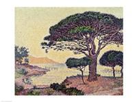 Umbrella Pines at Caroubiers, 1898 Fine Art Print