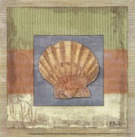 "Montego Scallop- petite by Paul Brent - 6"" x 6"" - $9.99"
