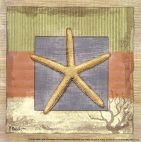 "Montego Starfish- petite by Paul Brent - 6"" x 6"" - $9.99"