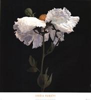 "Matilija Poppy I by Sondra Wampler - 24"" x 26"" - $23.99"