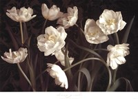 Bountiful Tulips Fine Art Print