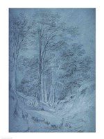 Study of ash and other trees Fine Art Print
