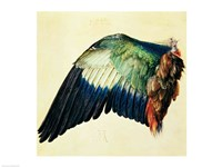 Wing of a Blue Roller, 1512 Fine Art Print