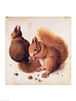Squirrels, 1512 Fine Art Print