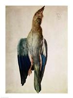 Blue Crow, 1512 by Albrecht Durer, 1512 - various sizes - $16.49
