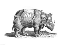 Rhinoceros Framed Print