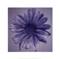 Oceana Flora IV Fine Art Print