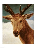 Head of a Stag, 1634 by Diego Velazquez, 1634 - various sizes
