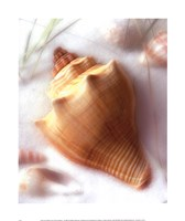Sand and Shells VI Framed Print