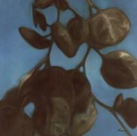 Eucalyptus I Fine Art Print