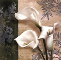 Lily Fair Fine Art Print