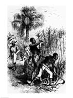 Slaves Working on a Plantation Framed Print