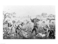 Picking Cotton on a Southern Plantation - various sizes, FulcrumGallery.com brand