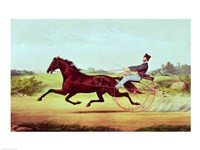 The Celebrated Horse - various sizes - $16.49