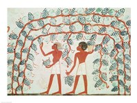 Picking grapes, from the Tomb of Nakht - various sizes, FulcrumGallery.com brand