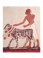 Peasant leading a cow to sacrifice Fine Art Print