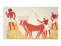 Using cows to trample wheat, from the Tomb of Menna Fine Art Print