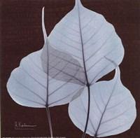 "X-ray Leaf Study in Teal II by Albert Koetsier - 6"" x 6"""