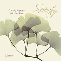 Serenity Gingko Framed Print