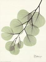 Cascading Eucalyptus Framed Print
